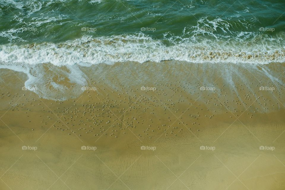 Looking down at the sand birds, playing in the waves