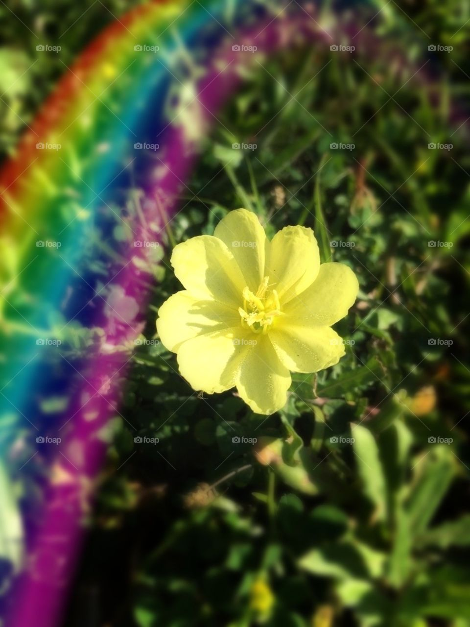 Color love with a yellow buttercup and rainbow