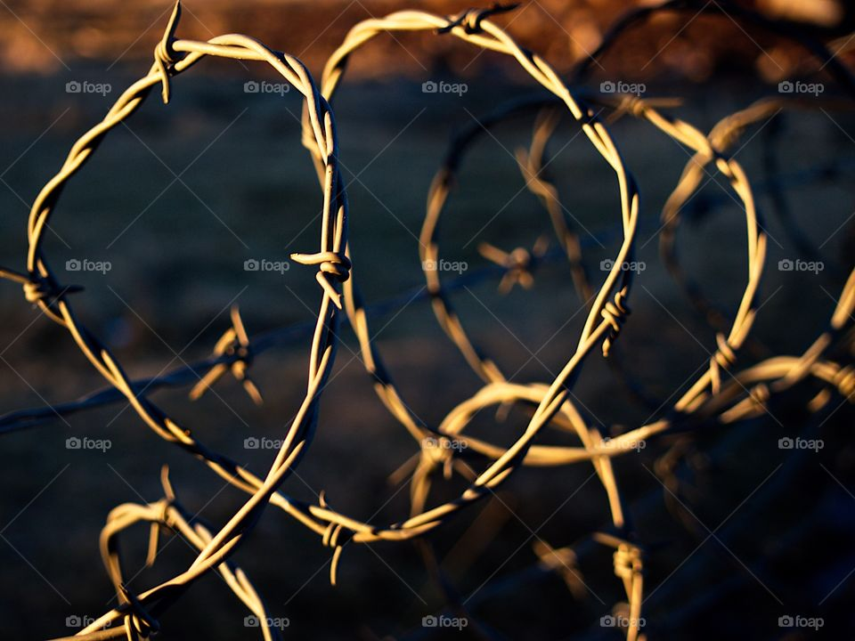 Barbed wire on a fence glowing gold from the light of the setting sun on a rural farm in Central Oregon on a winter evening.