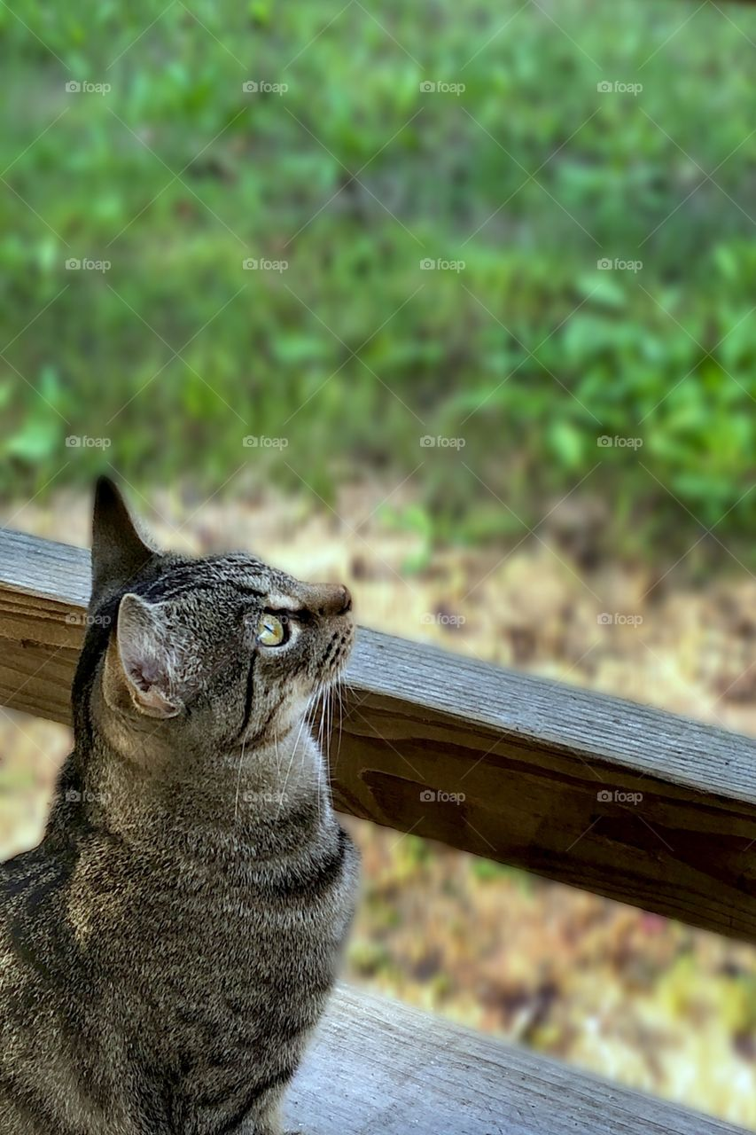 Benjamin Linus Watching