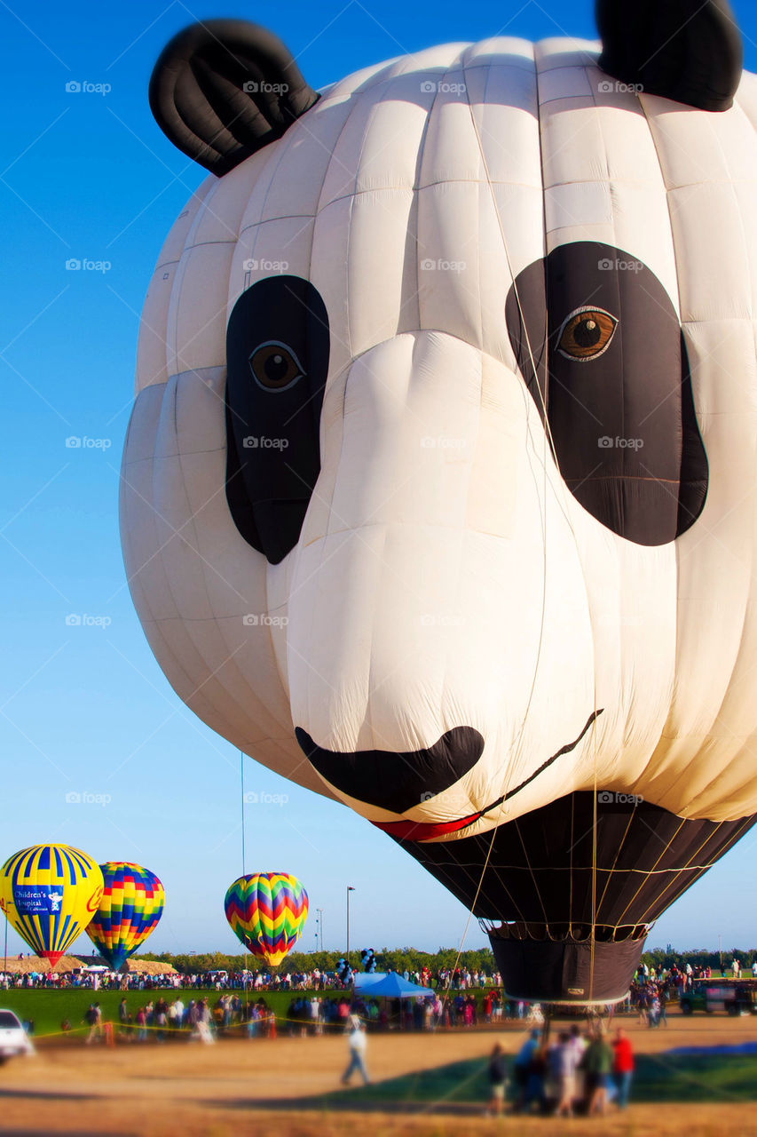 Panda hit air balloon