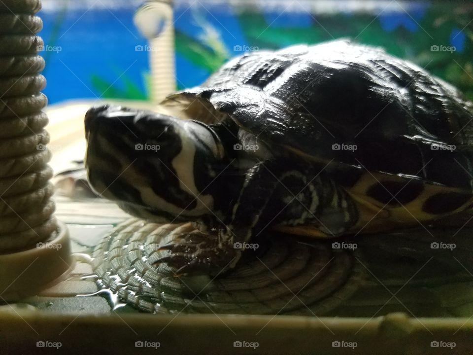 Reptile, No Person, Food, Nature, Wildlife