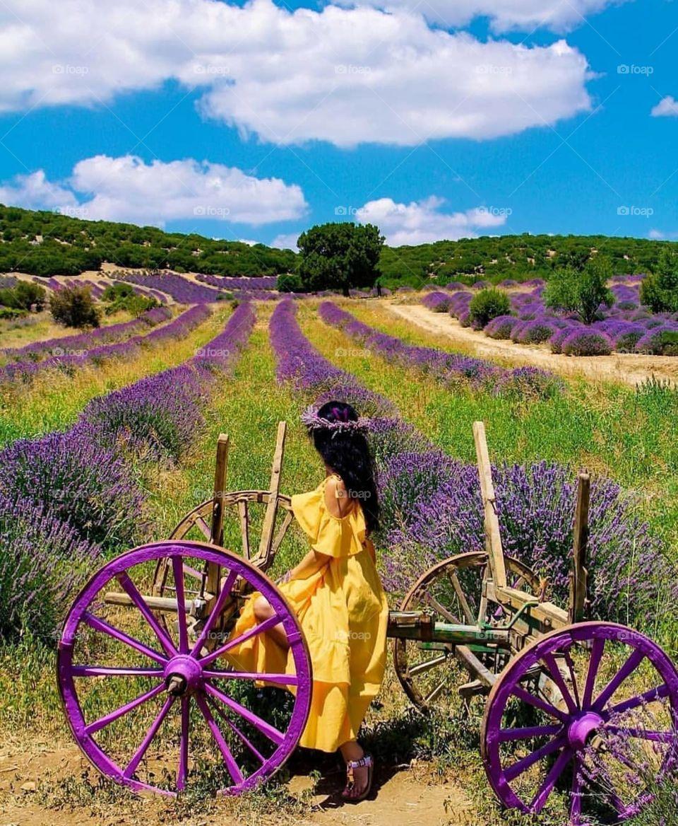 A lavender garden in Turkey