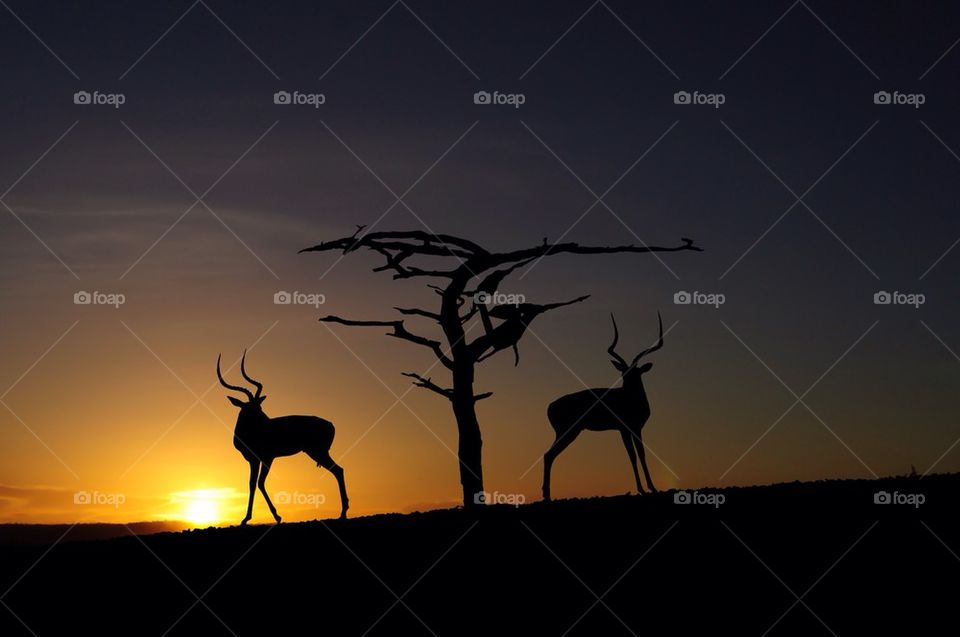 Silhouette of antelope near the bare tree