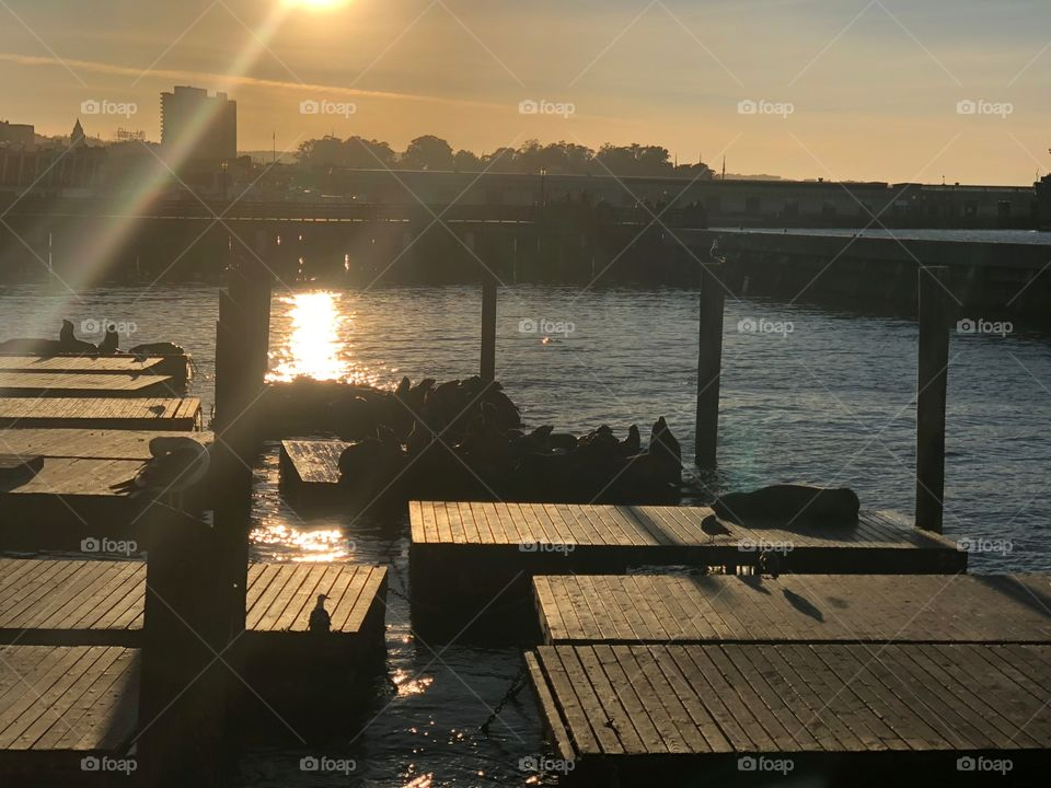 Sunset over the harbour with the sea lions chilling out and getting last bit of sun