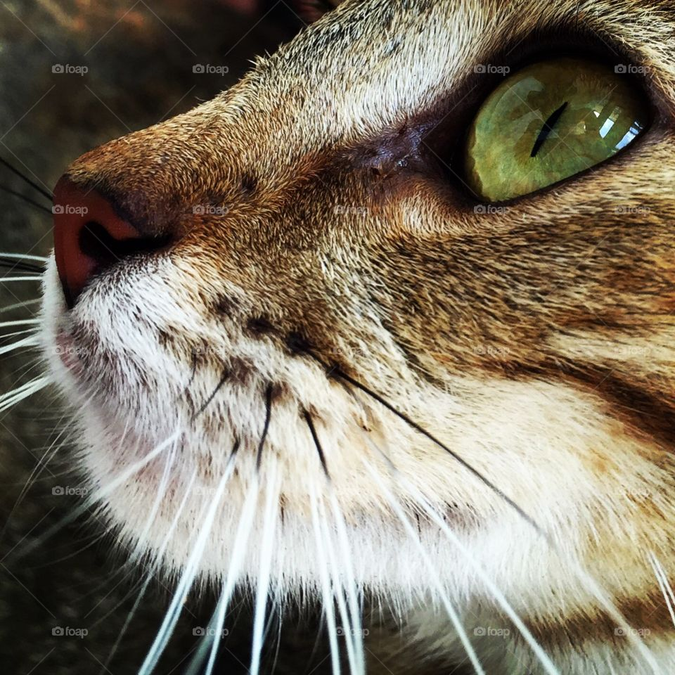 Show Us Your Best Photos, Cat Closeup, Cat Eyes, Rescue Animal Portrait, Wildlife Photography, Stray Cat