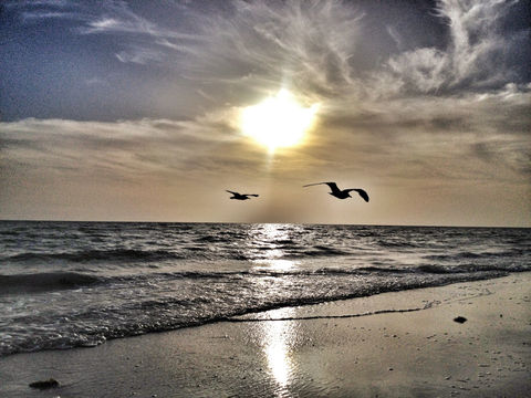 beach sunset birds sand by rebelnoise