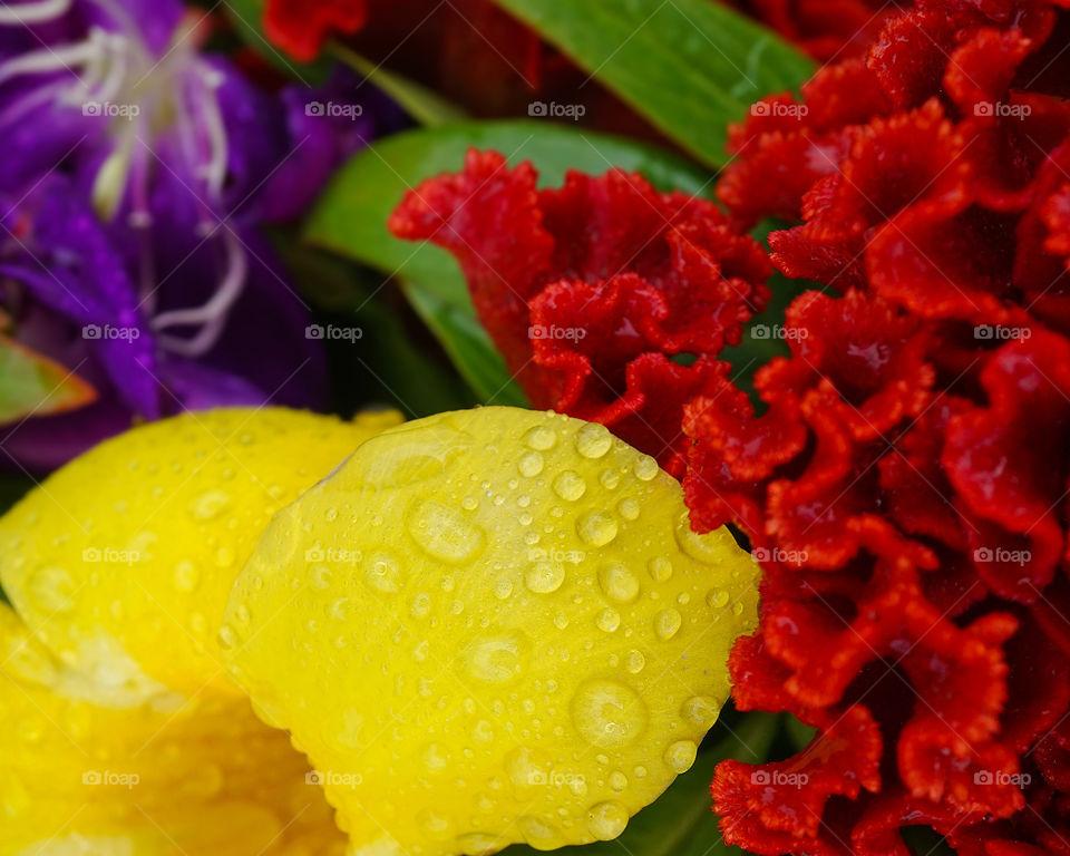 Purple, yellow and orange flowers - closeup