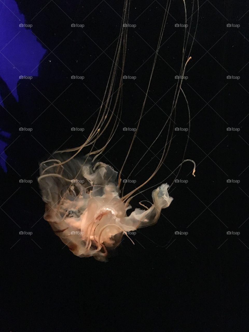 Close-up of jellyfish swimming