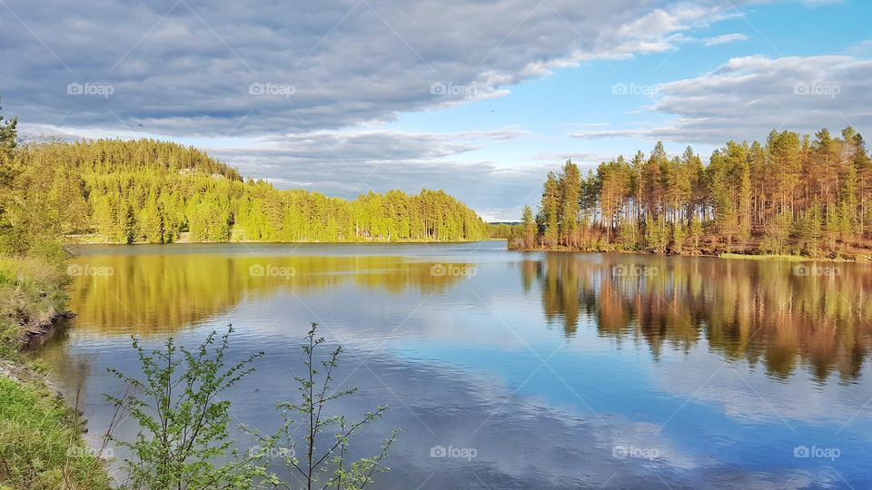 Reflection of trees in idyllic lake