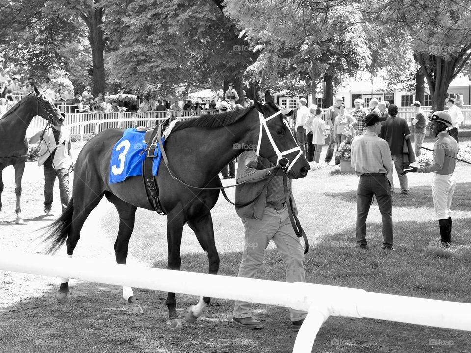 Belmont Park. Our Amazing Rose j n the Belmont paddock warming up for the Jersey Girl stakes.  Fleetphoto