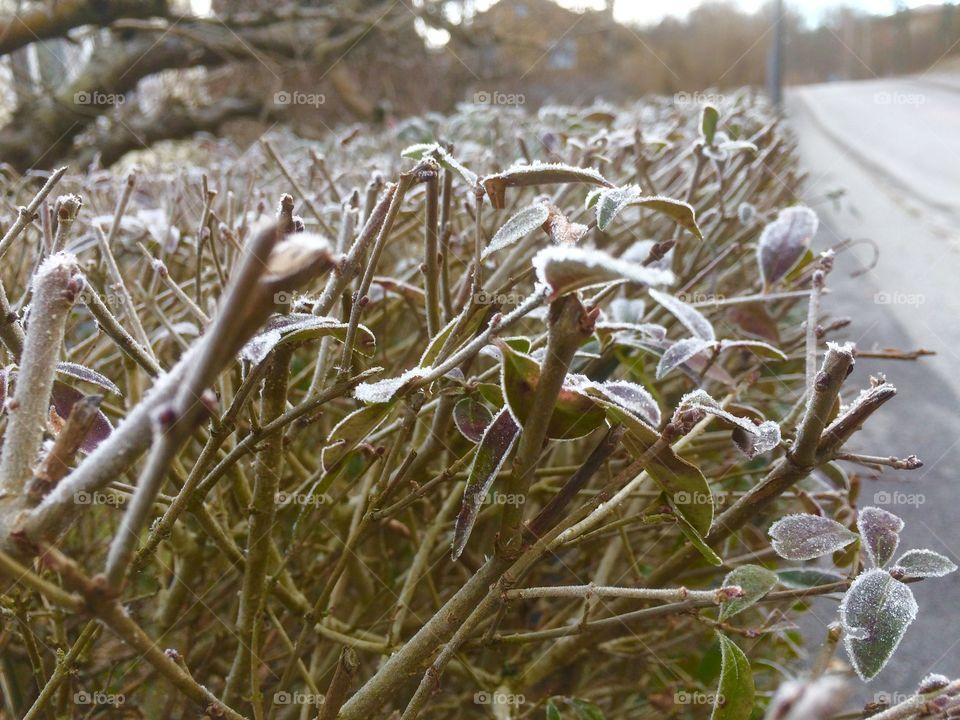 Outdoors winter