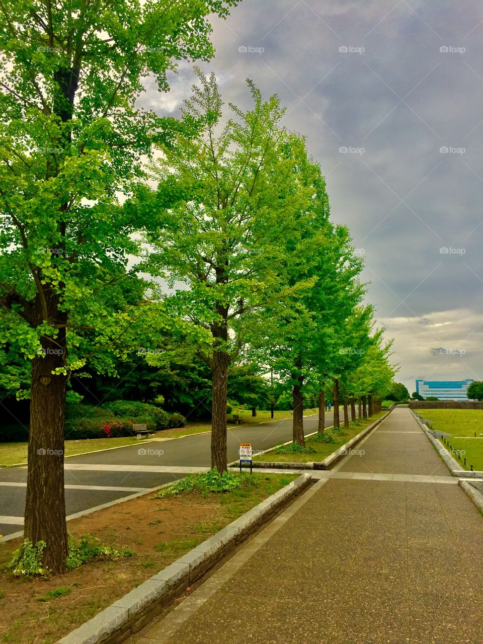 Trees and Trees. Showa Memorial Park. Tachikawa, Japan