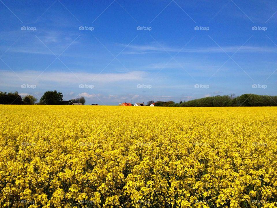 landscape sky sweden yellow by annajensen