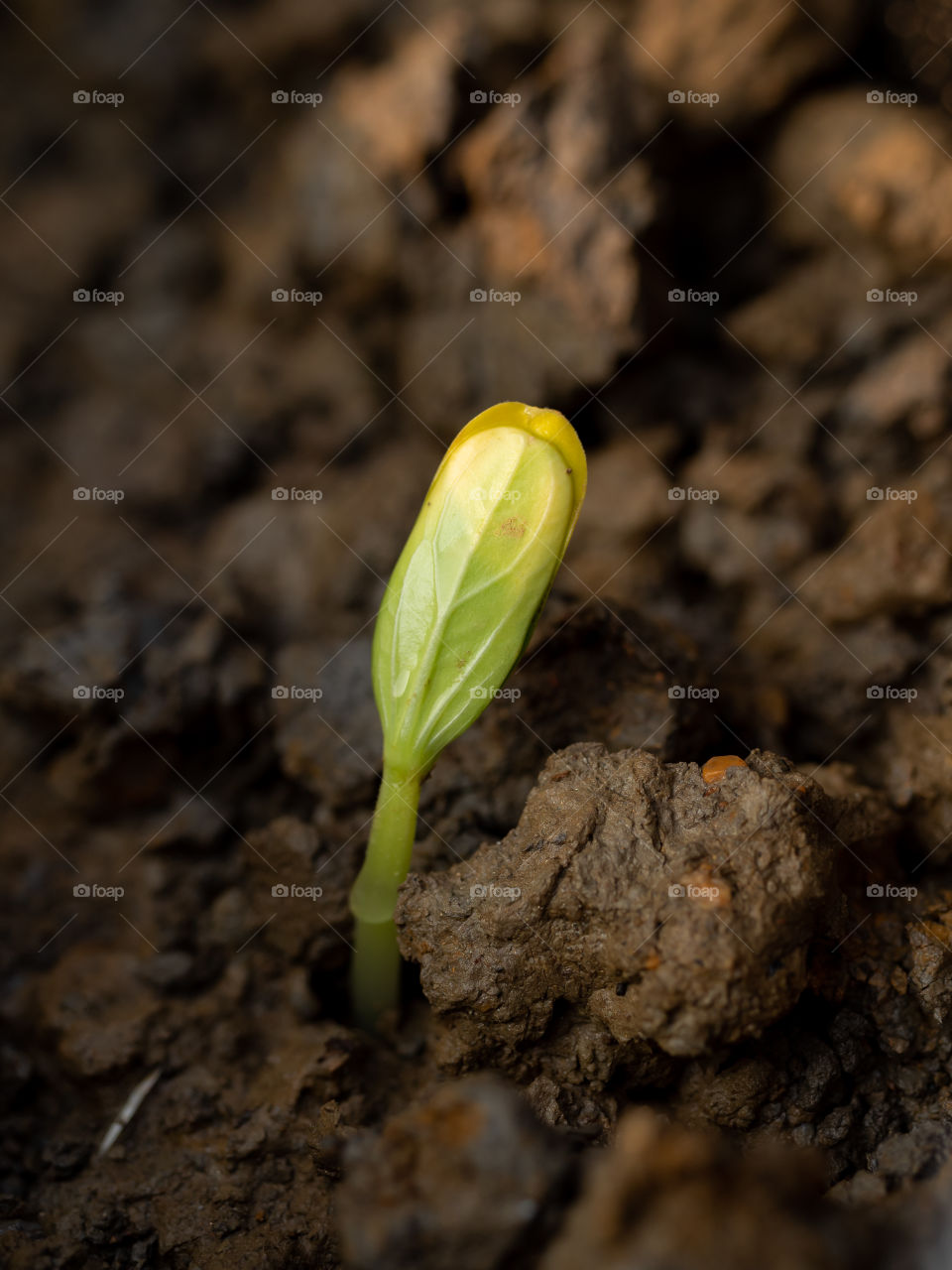 Spring brings new start, happiness, love & a sweet vibes in the air. The mother nature gives birth to new life. Seeds are sprout out & open eyes to see the beauty of nature.