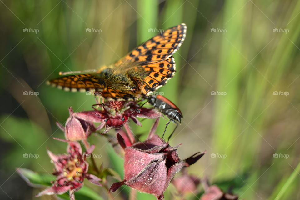 butterfly and a bug sharing a taste of a nectar
