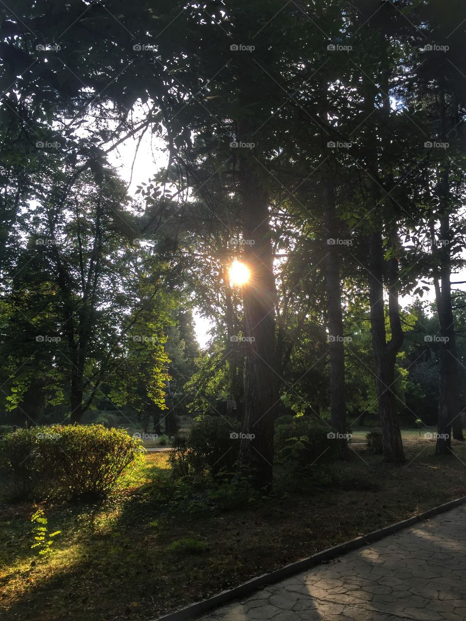 Early sunrise through trees in forest park