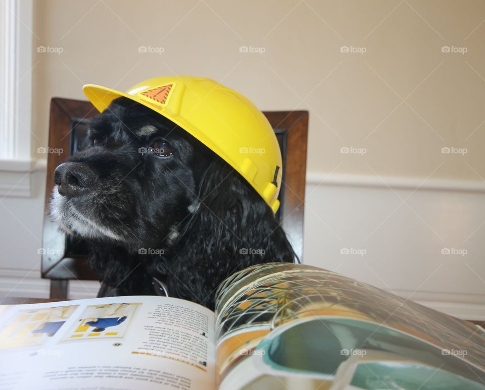 Buddy the construction project leader
