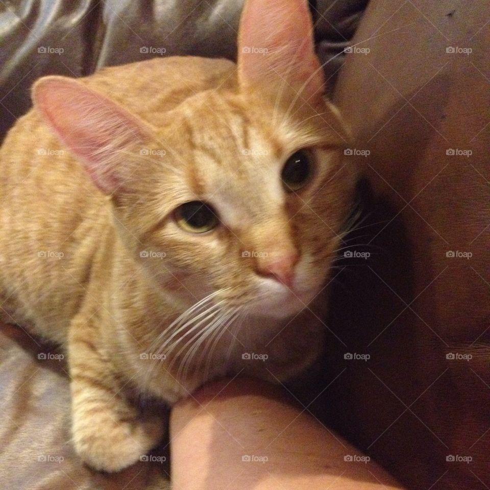 My izzy . Orange cat