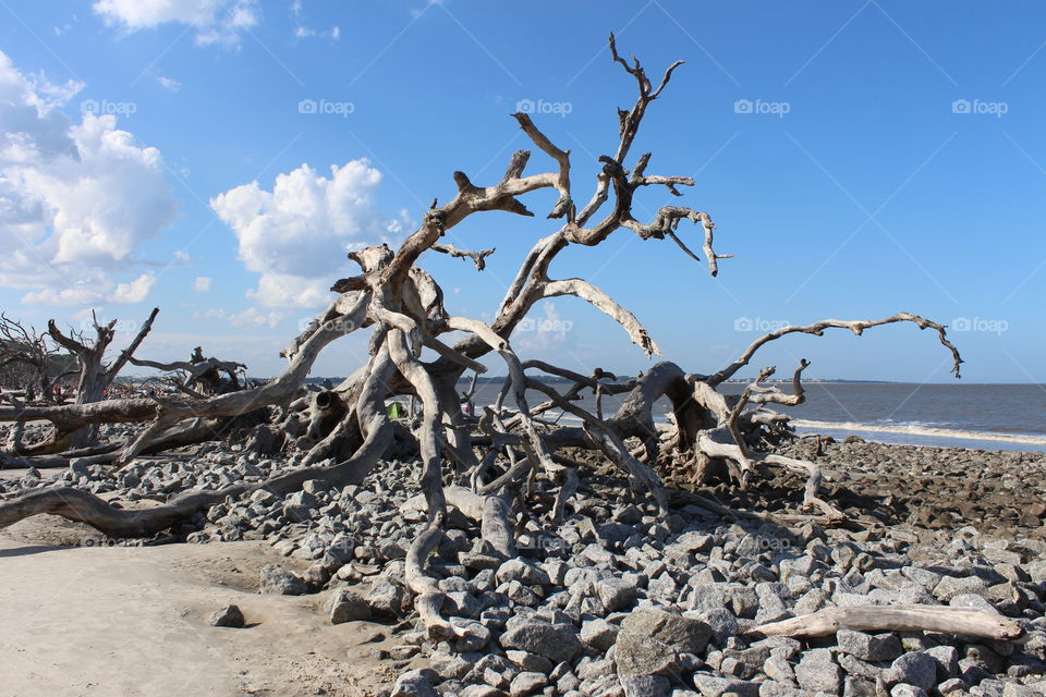 driftwood caught in the rocks