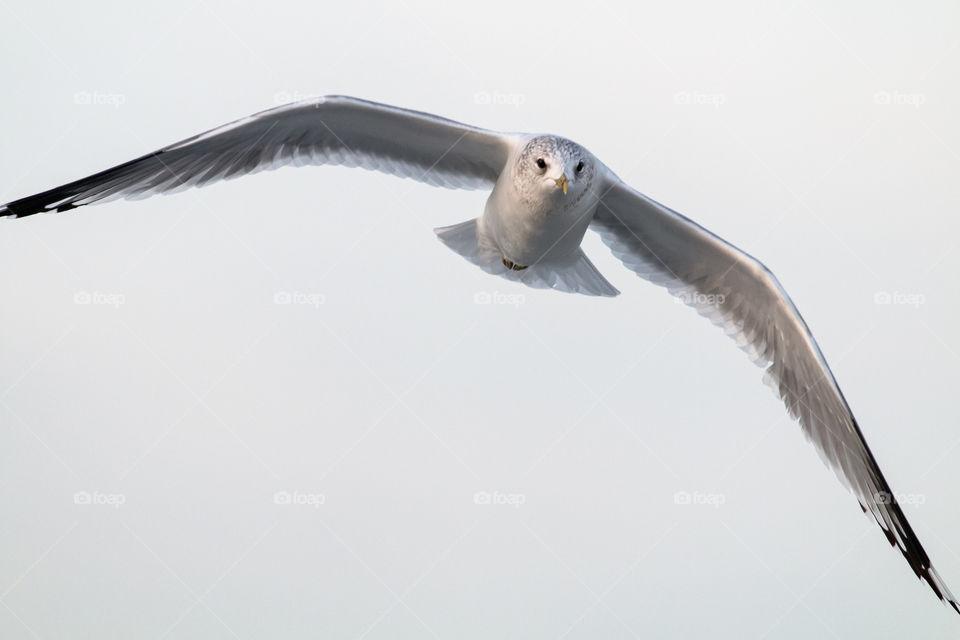 White bird flying against sky