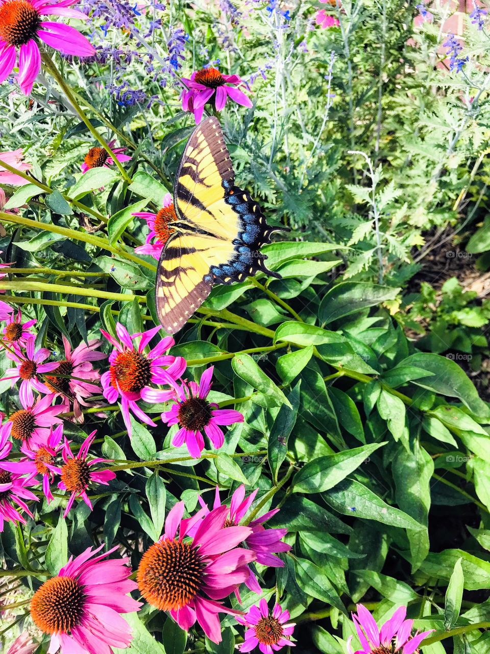 Gorgeous bright butterfly sitting perched a top beautiful flowers in lush garden!!