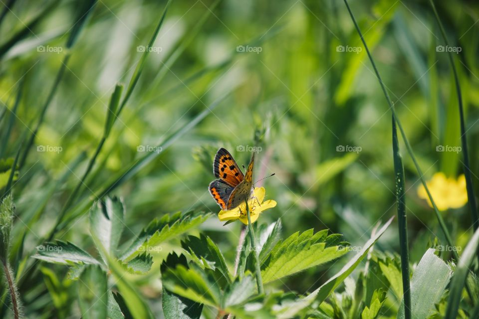 Butterfly on a yellow wild flower