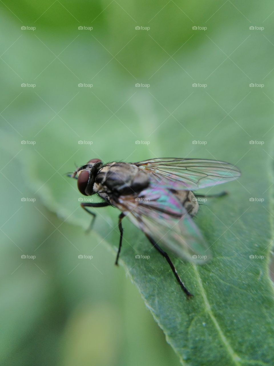 Close-up of housefly on green leaf