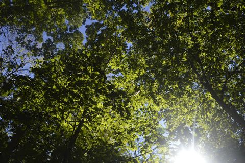 Sunlight filtering through the leaves