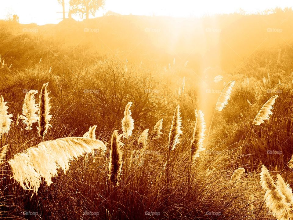 Sunlight over meadow at Los Angeles
