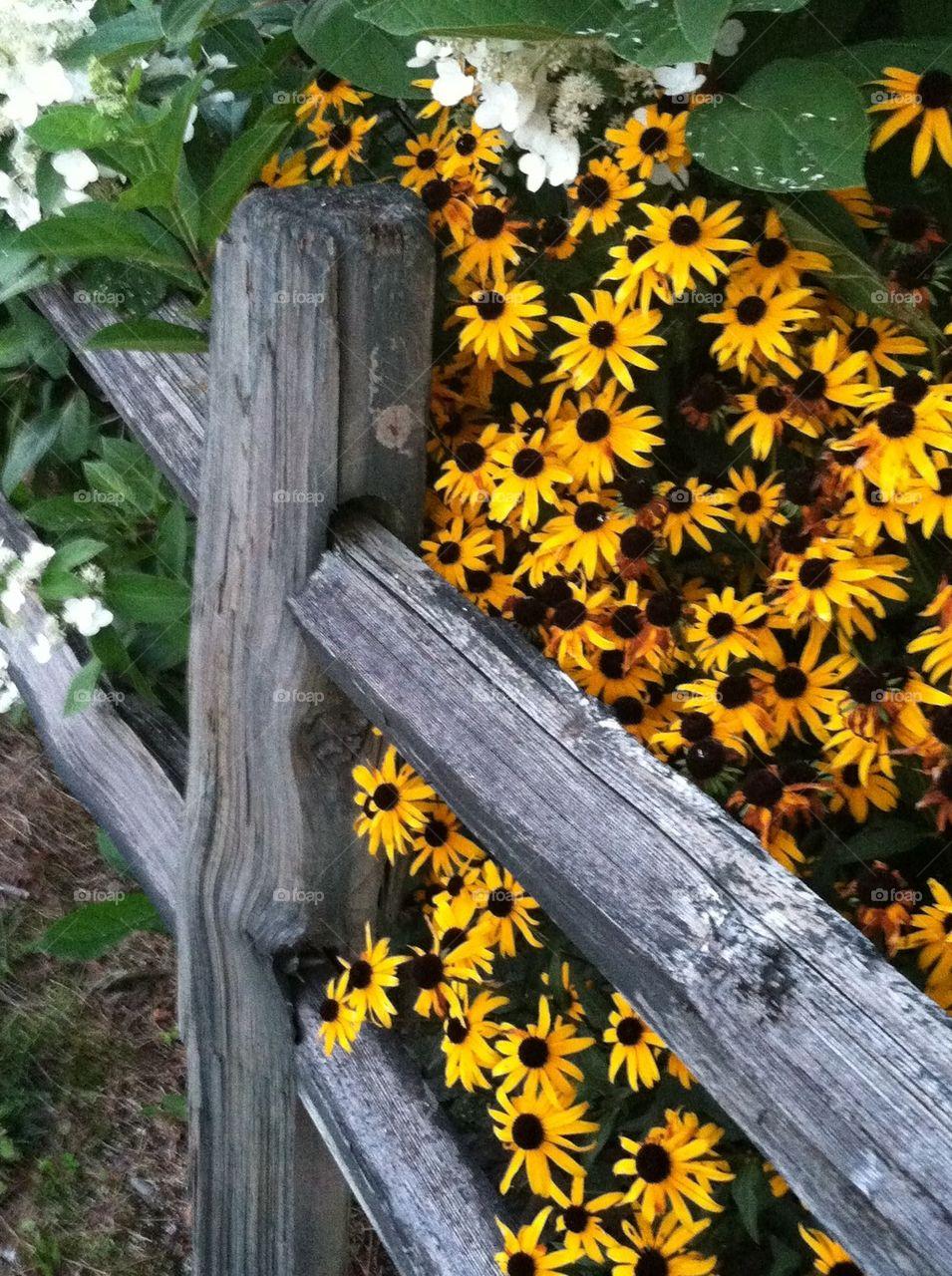 Split Rail and Flowers