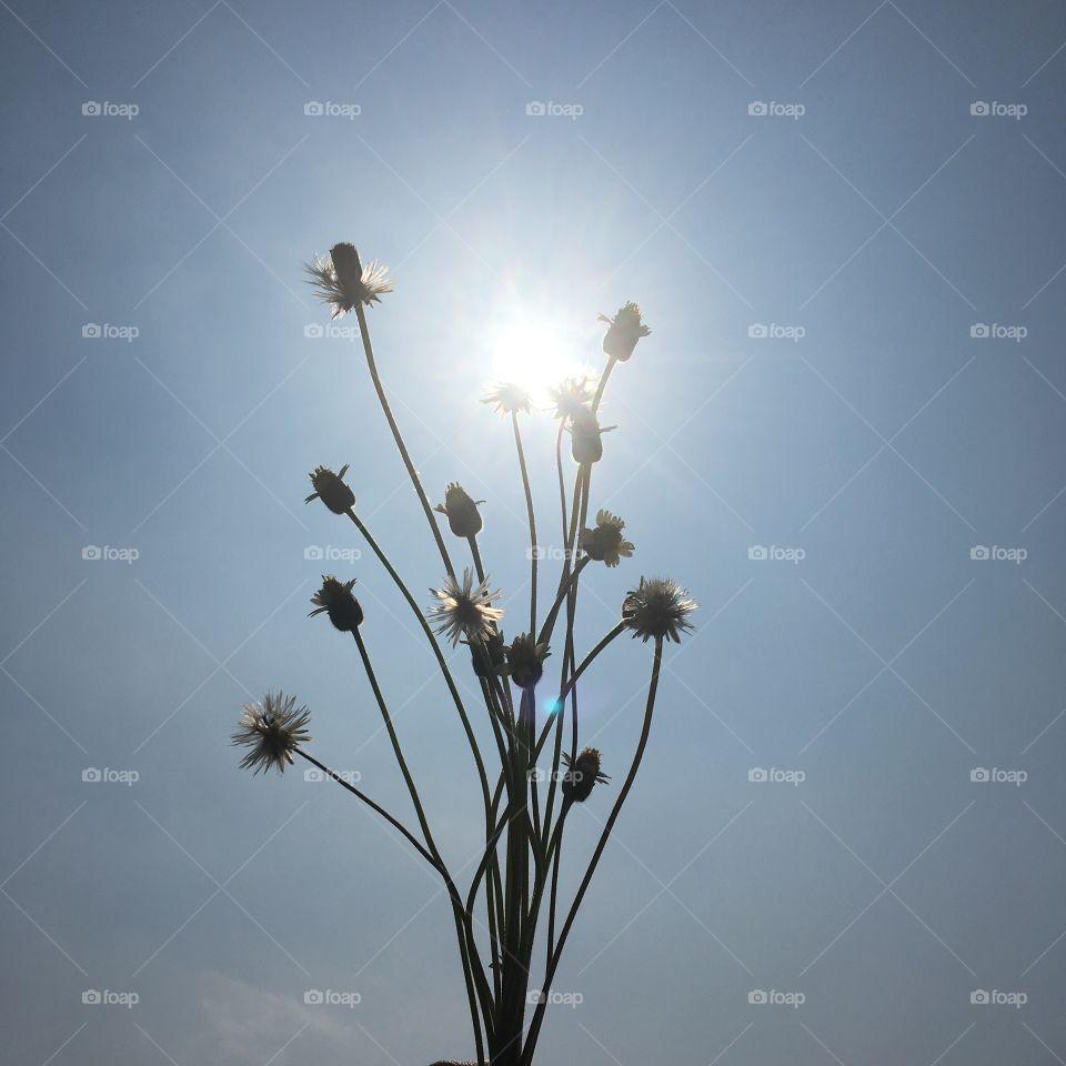 Sunshine at afternoontalk