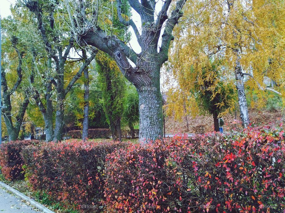 Saratov Russia, park near river Volga, novemberrr 2017