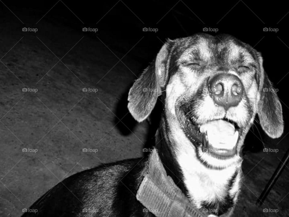 A alegria de um cão.