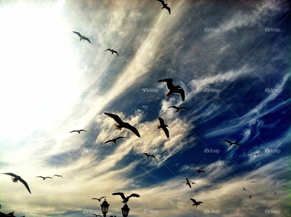 sky birds sea fly by oaslani