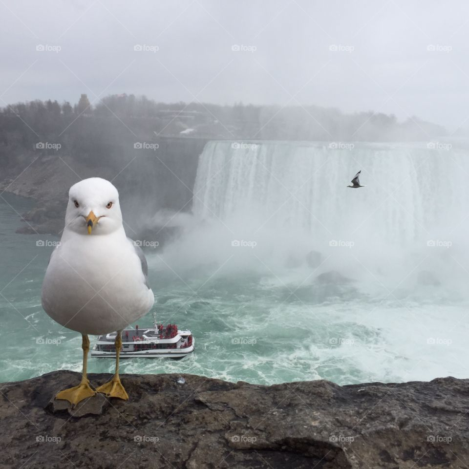 Perfectly timed photo in Niagara Falls, Canada