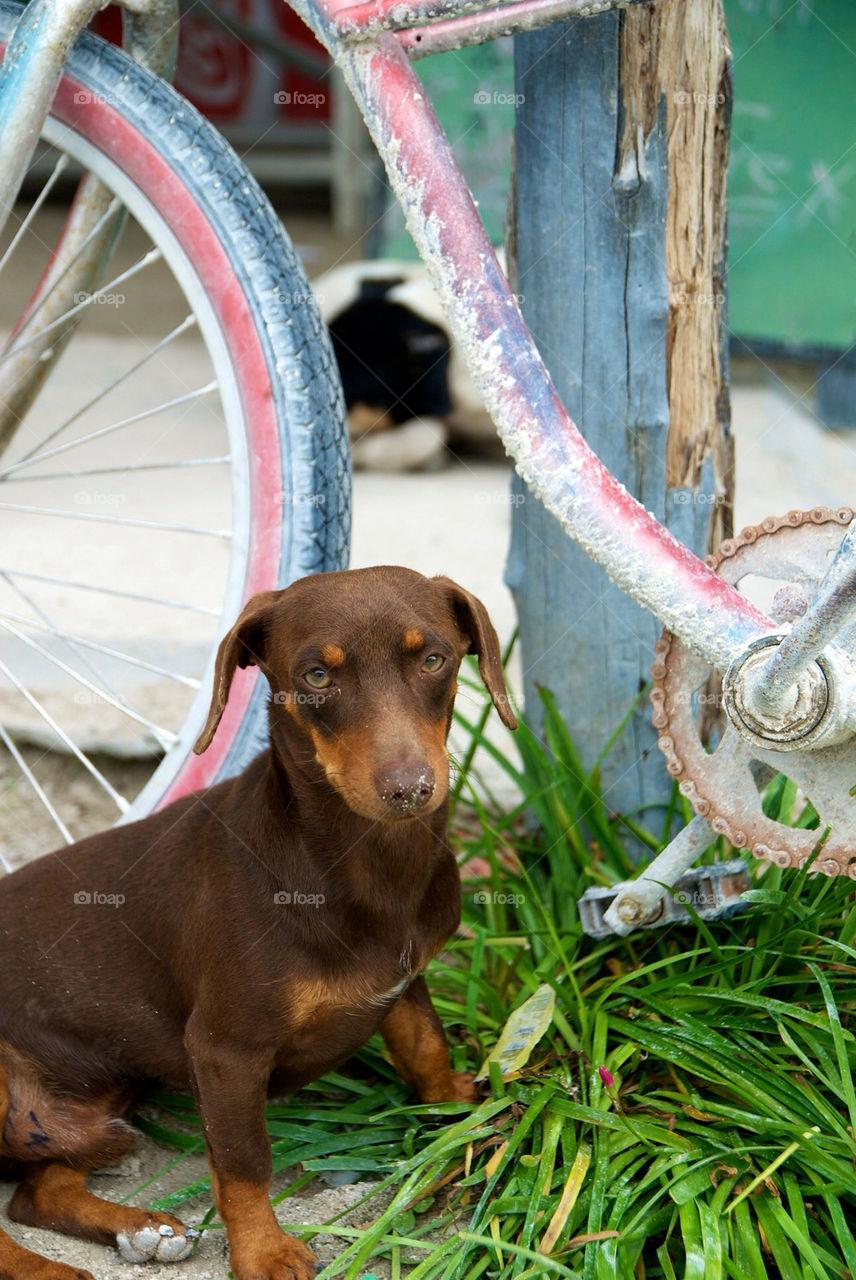 bicycle grass bike dog by christofferv