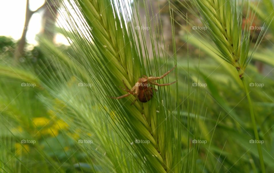 A Spider on a Plant