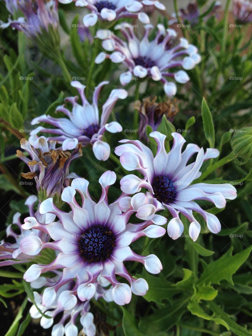 italy garden flower macro by wingtorn