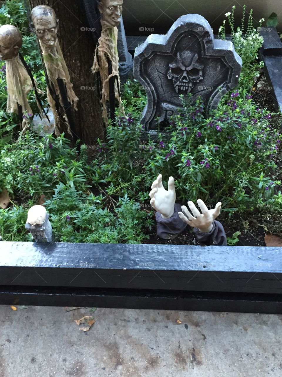 Haunted flower bed
