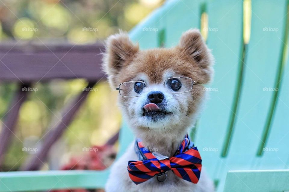 He loved his bowtie and glasses. Professor Scooch we called him.