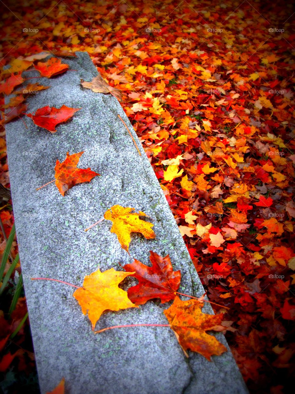 A bed of freshly fallen Autumn leaves on the ground with a few scattered upon the top of a cemetery headstone.