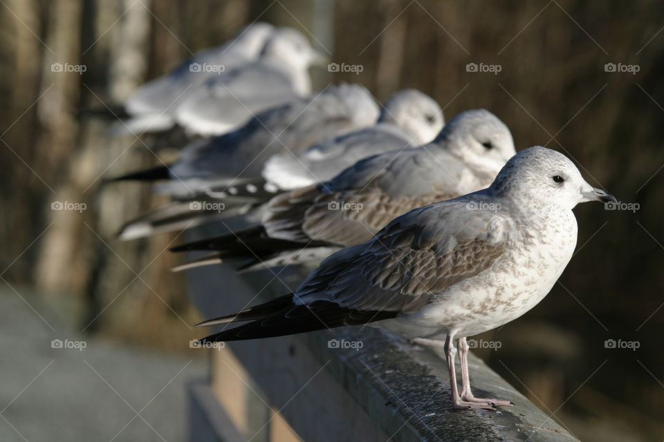 Seagulls on a fence.