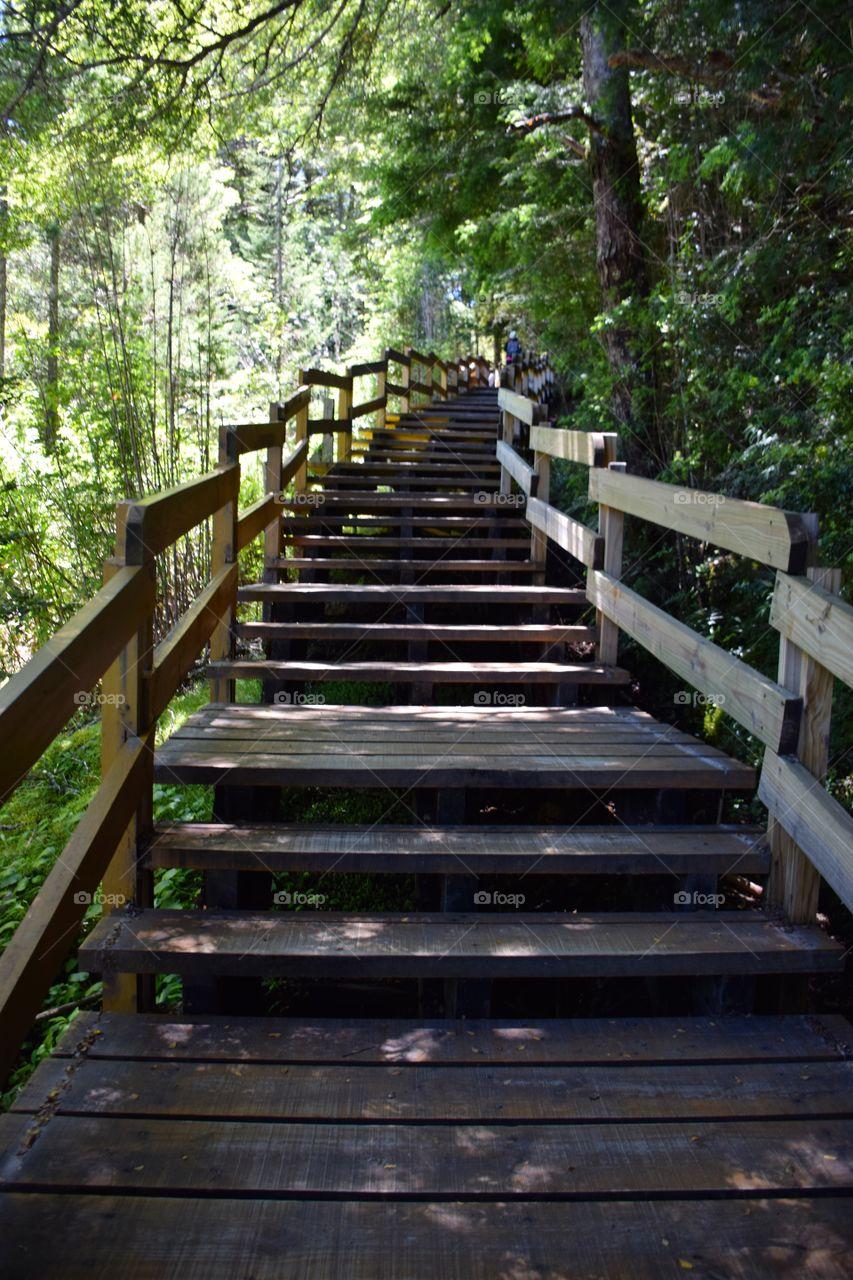 Wood Stairs at Argentinian nacional park
